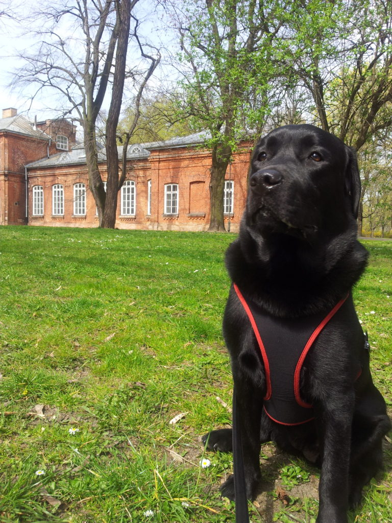 Coco, assistance dog, Blumil wheelchair