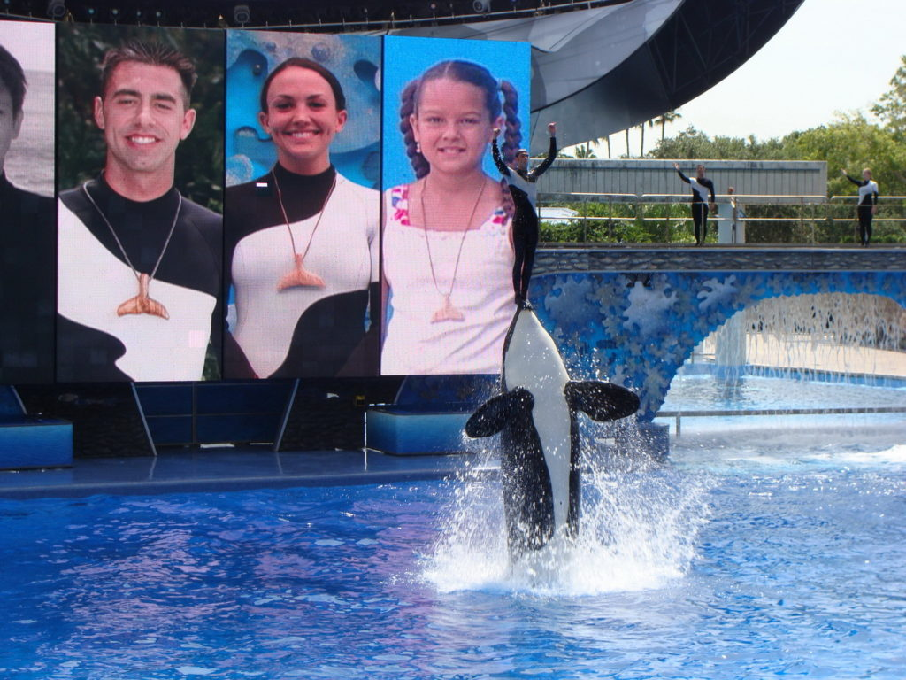 Killer whales' show in SeaWorld Orlando, Florida, USA, accessibility rating