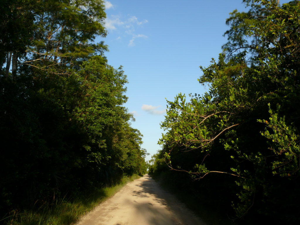Forests in Florida, green Florida in Everglades National Park, accessible travel, Blumil wheelchair