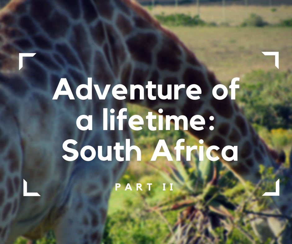 South Africa, RSA, travel in a wheelchair, accessible traveling, safari